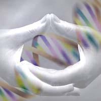 lo stato quantico del DNA