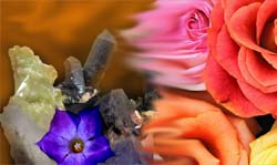 Minerali e vegetali
