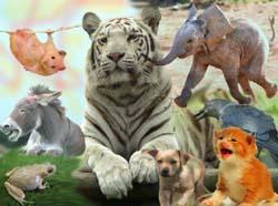 Il popolo degli animali