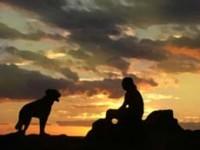 La misteriosa guida invisibile di cani e gatti