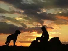 Una guida invisibile guida cani e gatti