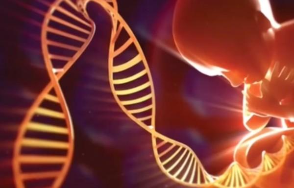 """Solo il 10% del nostro DNA è utilizzato per costruire proteine, ed è proprio questa parte del DNA che è stata studiata e catalogata dagli scienziati occidentali. Il restante 90% della molecola è considerata scarto o """"spazzatura"""". Essendo convinti che la Natura non poteva essere così sciocca, gli scienziati russi hanno messo insieme genetisti e linguisti per studiare il DNA-spazzatura. E i loro risultati sono rivoluzionari: il DNA non è solo responsabile della costruzione del nostro corpo, ma è anche un mezzo di immagazzinamento di dati ed informazioni."""