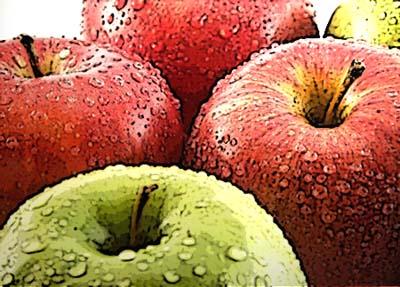 Il melo,  l'albero della vita