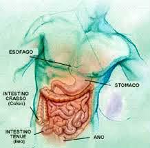 Circuito gastrointestinale