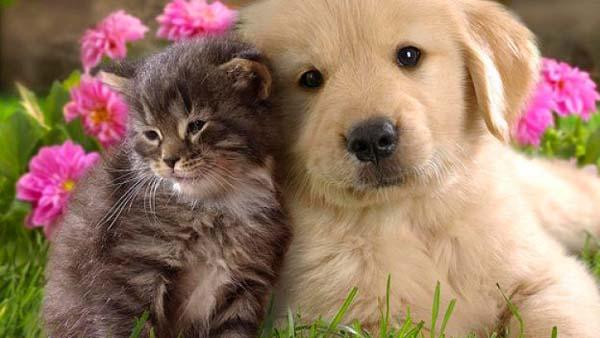 Milioni di persone, che altrimenti si perderebbero completamente nelle loro menti e in faccende passate e future senza fine, sono riportati spesso proprio dai loro cani o gatti nel momento presente, a recuperare la gioia dell'Essere.