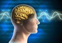 Onde cerebrali armoniche