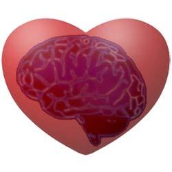 Cervello del cuore