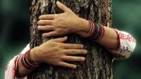 Abbracciare un albero