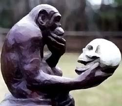 Evoluzione uomo dalla scimmia