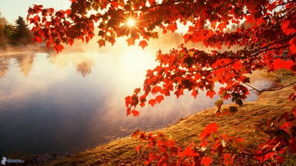 albero-autunnale-tramonto-sopra-il-lago