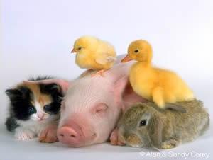 Vulnerabilità animali
