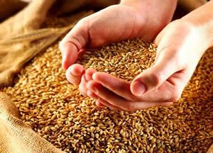 Consumare cereali integrali