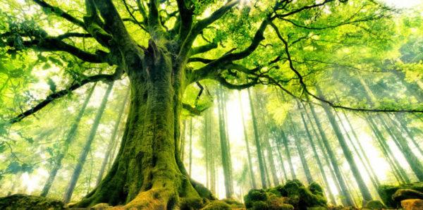 Le piante hanno un'anima