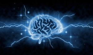 Processi quantistici nel cervello