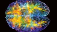 Fisica quantistica, Cervello e Coscienza