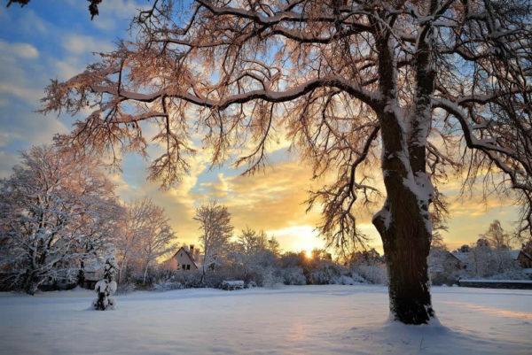 Albero con neve al tramonto