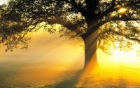 Ricerca spirituale