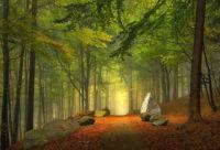 Forza guaritrice degli alberi