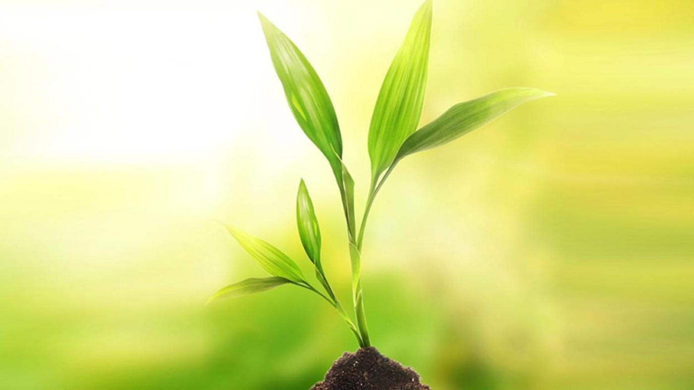 Risultato immagini per siamo semi