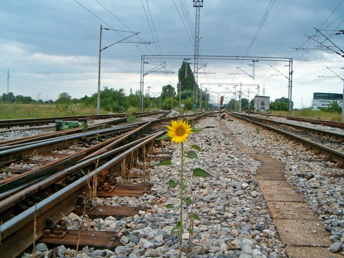Railroad flower by Hrodwulf123 on DeviantArt