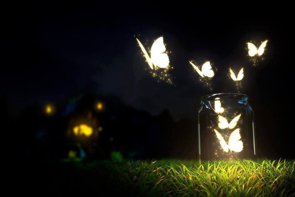 Strade di latta : Sogni come farfalle