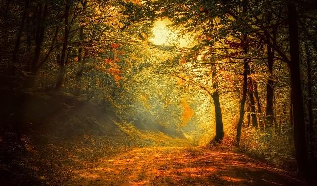 Passeggiate nel bosco, il relax che profuma d'autunno - The Mood Post