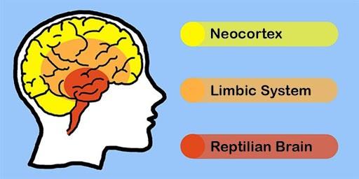 A quale cervello parlare? relazionarsi al meglio con gli altri grazie alla Teoria dei 3 Cervelli | Improvemenship La teoria dei tre cervelli