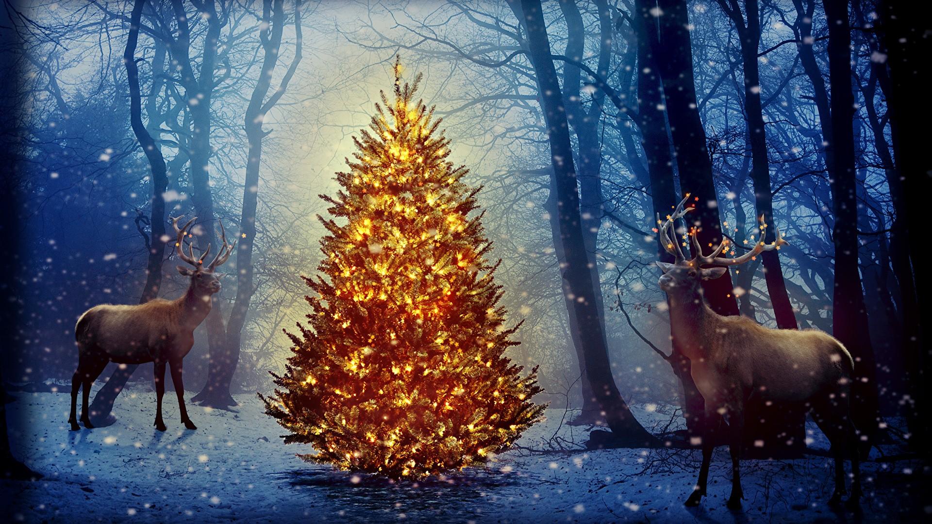 Sfondi del desktop cervidi Capodanno Natura Inverno Albero 1920x1080