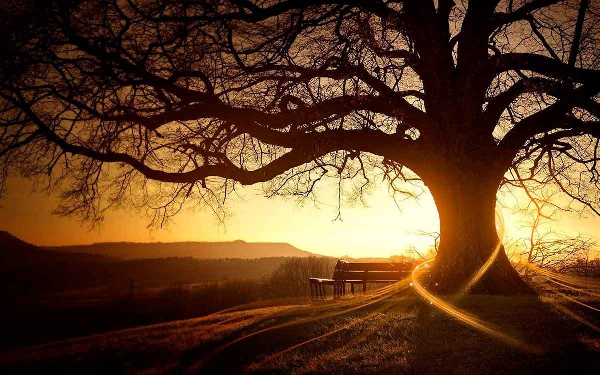 """Poesia: """"Il sentiero del destino""""   Informareonline.com"""